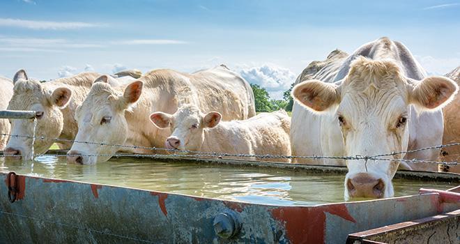 « L'eau est un élément qui peut devenir nocif. » ©PhotoGanary