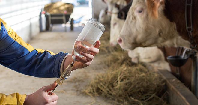 Le projet cofinancé par l'Union européenne vise à proposer des solutions concrètes pour lutter contre l'indisponibilité de certains antibiotiques en France et éviter les pollutions environnementales lors de leur production. © Budimir Jevtic/Adobestock