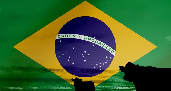 En 2018, l'Union européenne a absorbé 7 % des exportations brésiliennes et 11 % en valeur. CP : Alexandra Sanchez/Adobe Stock.