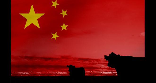 La Chine est aujourd'hui le quatrième producteur mondial de viande bovine et le premier importateur. CP : Alexander Sánchez/Adobe Stock