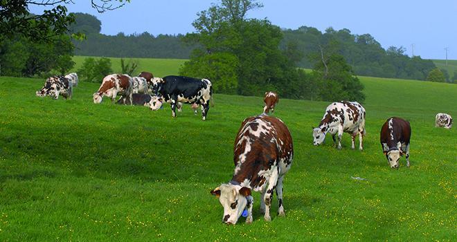 Au premier trimestre la collecte laitière est à son plus bas niveau depuis 2013. ©Photoagriculture/Adobestock