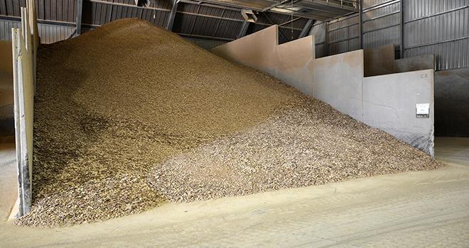 Le secteur de la nutrition animale fait part de son enthousiasme suite aux annonces détaillées de la stratégie protéines végétales. Photo : Happyculteur/Adobe stock