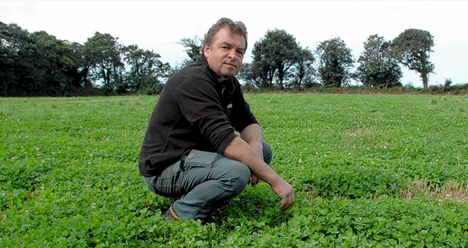Depuis 2012, André Divanac'h et son épouse développent l'implantation de trèfle blanc en association avec du colza et du blé. © D.Bodiou/Pixel6TM