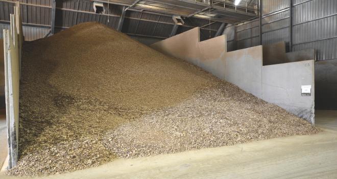 L'Europe peut-elle se passer du soja américain ? CP: DR.