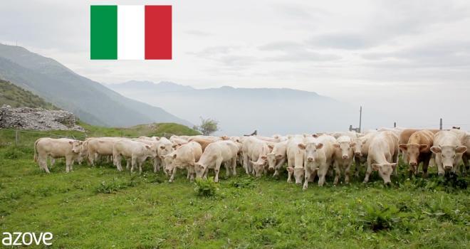 Le Covid-19 a fortement impacté la filière viande en Italie. CP : Azove