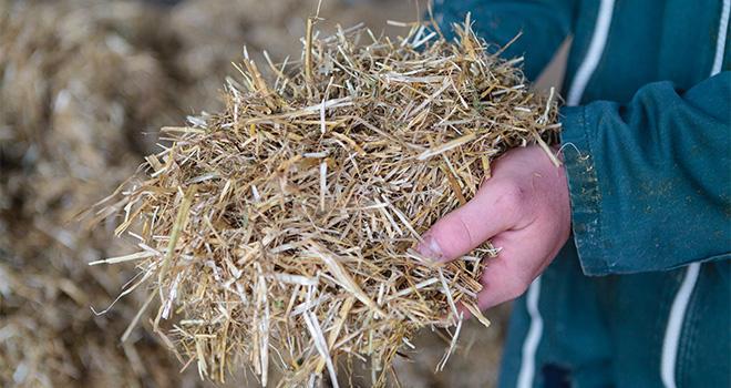 Les bovins consomment 89 % des fourrages produits en France. CP : L.Page/Cniel