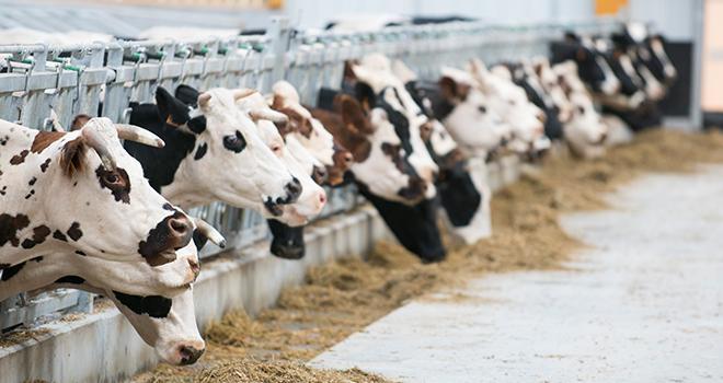 L'accès à l'alimentation et à l'eau est l'une des cinq libertés fondamentales sur lesquelles s'est appuyé le Cniel pour définir les seize indictaeurs de bien-être animale. Photo : ©C.Helsly/Cniel