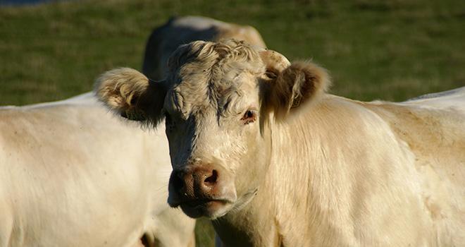 Les activités élevage du groupe coopératif Axéréal seront regroupées sous la bannière Axéréal Élevage. Photo : Axéréal