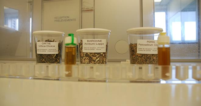 Pour confectionner ses produits, le laboratoire Biodevas extrait les actifs depuis des plantes séchées.