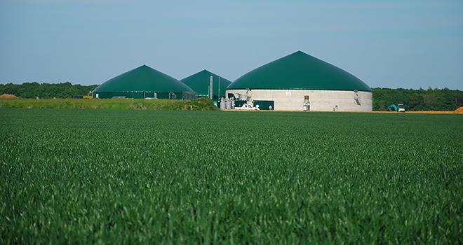 La ferme d'Alger a misé sur les cultures énergétiques et n'a donc reçu aucune subvention pour son projet de méthanisation. Photo : DR.