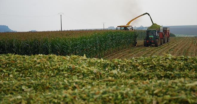 Résultats variétaux 2015 en maïs et betteraves   Mon Cultivar Élevage 9e9808ed77