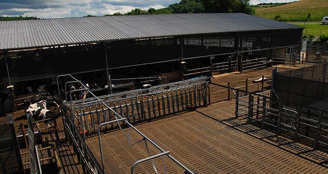 L'étable de la SARL Novalait comptant 310 vaches en lactation est un peu le laboratoire de l'EURL Ph. Deru. Photo : M. Lecourtier/Pixel image