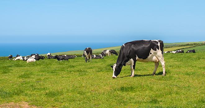 Le projet Dairy-4-Future vise à améliorer la résilience socio-économique et la durabilité des systèmes laitiers de l'Espace Atlantique. Photo : Springfield Gallery