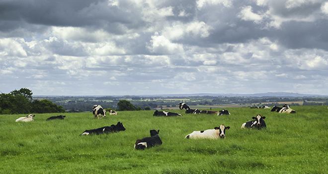 Sur les 383 nouvelles fermes bretonnes engagées en bio au cours de l'année 2017, 23 % le sont en production laitière.