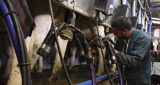 Alors que le nombre d'adhérents au Contrôle Laitier a diminué en 2013, le nombre de vaches contrôlées a, lui, augmenté.