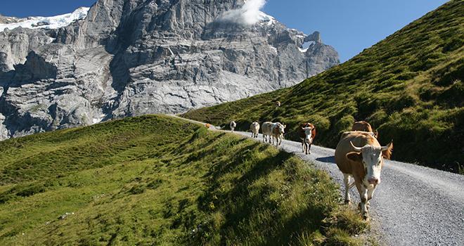 La FNPL craint de perdre des éleveurs en route si le prix du lait ne grimpe pas plus rapidement. Photo : ricky_68fr-fotolia