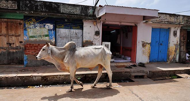 Les pays émergents sont pratiquement tous déficitaires en produits laitiers. Photo : PatrickMi-Fotolia