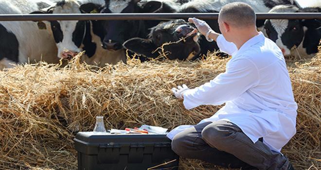 Les représentants des industriels du médicament vétérinaire réfutent le fait que le praticien n'est pas indépendant dans sa prescription. Jenoche - Fotolia.com