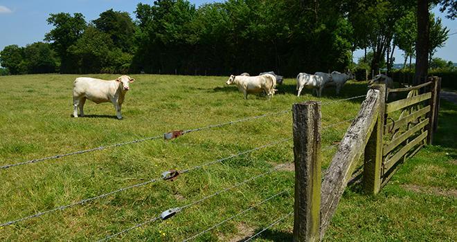 La consommation de viande en France est en baisse régulière depuis une dizaine d'années. Photo : david-bgn/fotolia