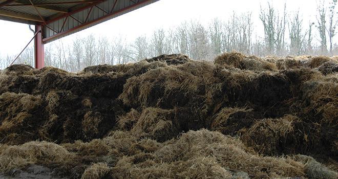 L'azote apporté par un fumier de bovins épandu au printemps (4 à 5 unités par tonne de produit frais) est valorisé à 30 % par le maïs.