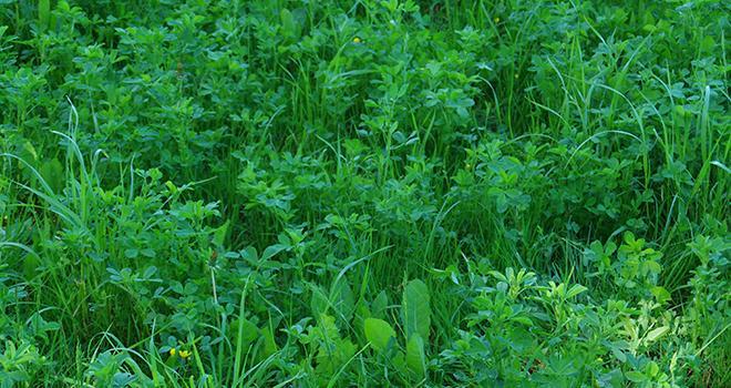 La Ferme de Thorigné d'Anjou expérimente depuis 2011 la technique des prairies sous couvert. ©Guihard/Pixel6TM