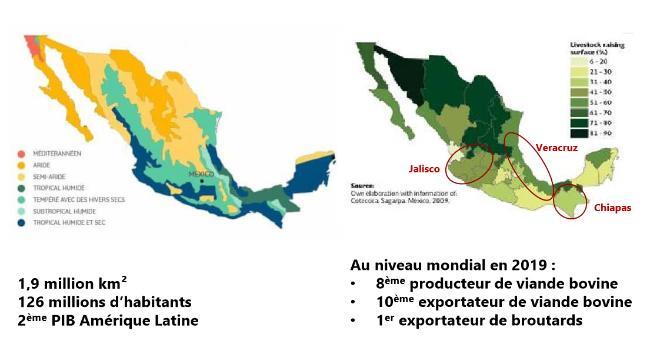 La filière mexicaine d'exportation de bovins a généré 1,28 milliard d'euros en 2019 . CP : DR