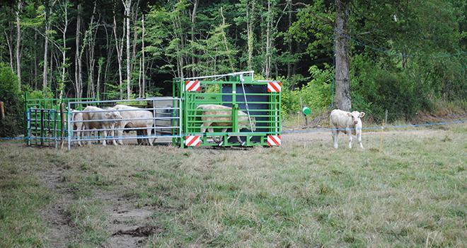 Avec l'outil PM 6000, l'enregistrement des poids des bovins s'effectue automatiquement grâce à la boucle électronique que possède chaque animal.