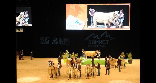 Quinze races à viande, dont cinq races étrangères, seront présentes en concours ou en présentation du 7 au 9 octobre à Cournon. CP : DR