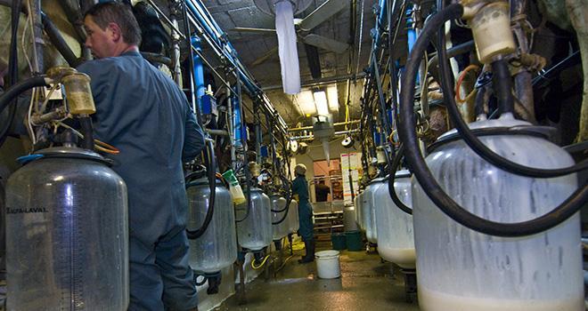 Dans l'élevage laitier, les effectifs de chefs d'exploitation ont diminué de 3,4 % entre 2016 et 2017.