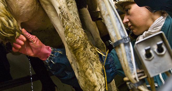 La génétique est l'un des moyens pour maîtriser les cellules et les mammites cliniques et fonctionne dans tous les élevages. Photo : C Helsly/CNIEL