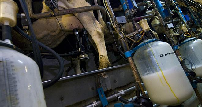 Selon le Cniel, la tendance haussière de la production de lait devrait se poursuivre dans l'Union européenne au cours des prochains mois. Photo : C. HELSLY/CNIEL