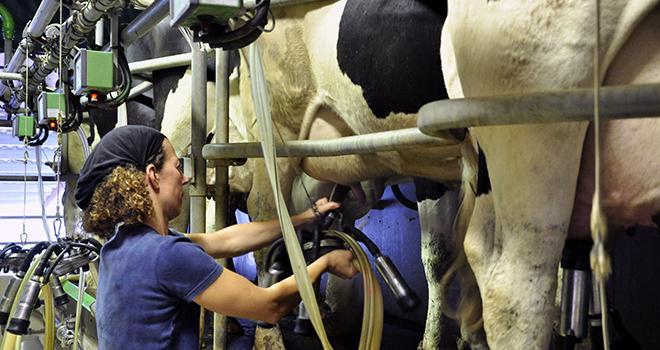 Le nombre global d'élevages actifs au Contrôle laitier a de nouveau baissé en 2014 alors que le nombre total de lactations a augmenté.  Photo : F.MILLION/CNIEL