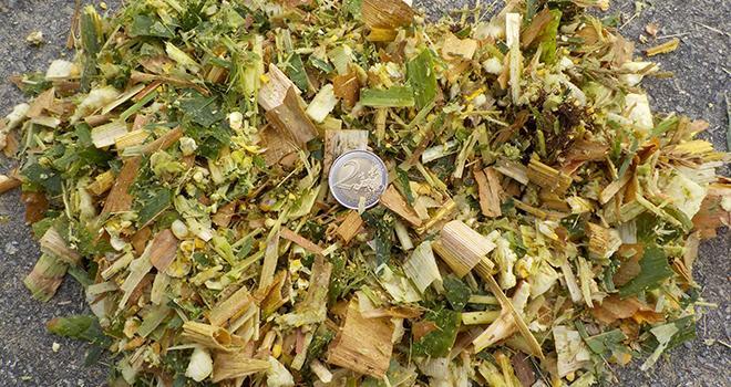 Les essais menés sur les fermes expérimentales des Trinnotières (49) et de La Jaillère (44) n'ont pas montré d'effet de l'apport de fibres longues par le maïs fourrage ni sur l'ingestion, ni sur les performances laitières. © A.Uijttewaal/Arvalis-Institut du Végétal