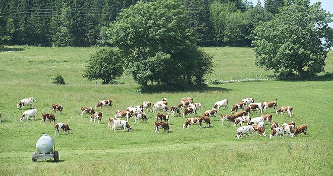 Dans le projet de loi de finances 2018, 5,7 M€ supplémentaires sont alloués au ministère de l'agriculture pour lutter contre les maladies animales, comme la tuberculose et la brucellose des ruminants. Photo : F.JOLY/CNIEL